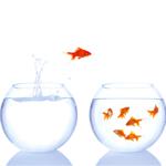 egyik akváriumból a másikba ugró hal