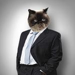 öltönybe öltözött macska