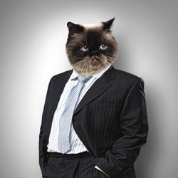 6 munkakör, melyben a macskák jobbak az embereknél