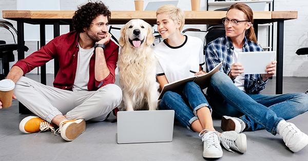 Háziállat a munkahelyen – Valóban növeli a hatékonyságunkat?