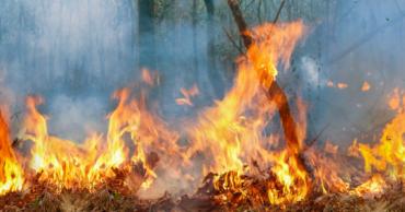 A fejlődés csapdája – Az amazonasi erdőtűz margójára