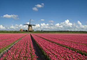 Munkavállalás Hollandiában